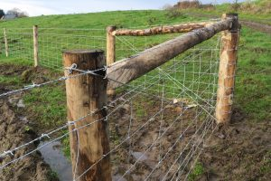 Chestnut Stock fencing with box strutted strainers